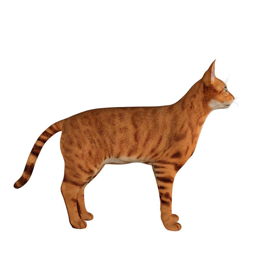 猫 royalty-free 3d model - Preview no. 7