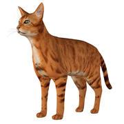 Кошка 3d model