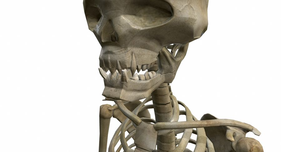 Skelett royalty-free 3d model - Preview no. 12