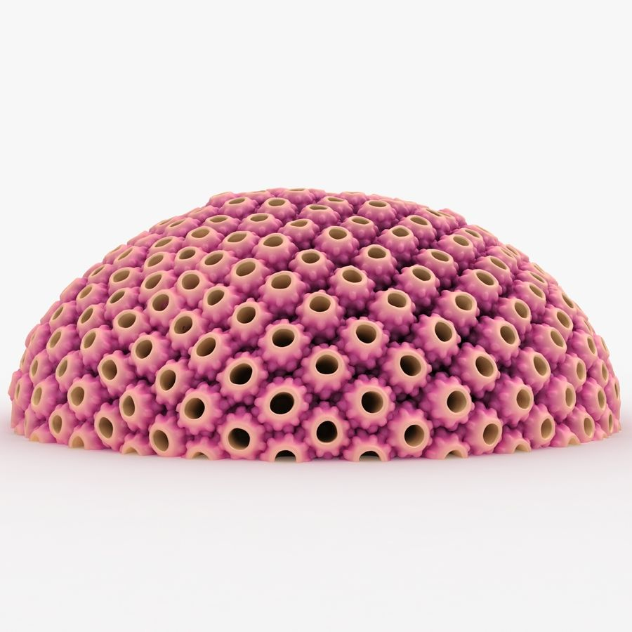 Astreopora Coral Pink royalty-free 3d model - Preview no. 4