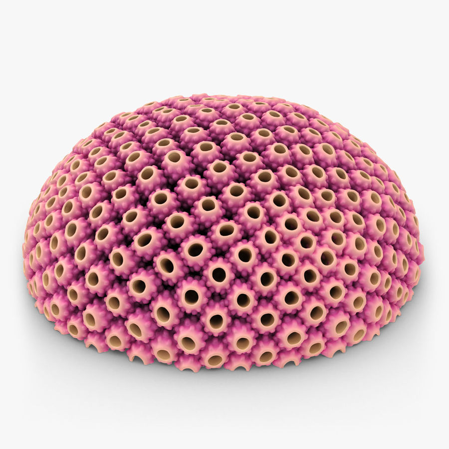 Astreopora Coral Pink royalty-free 3d model - Preview no. 1