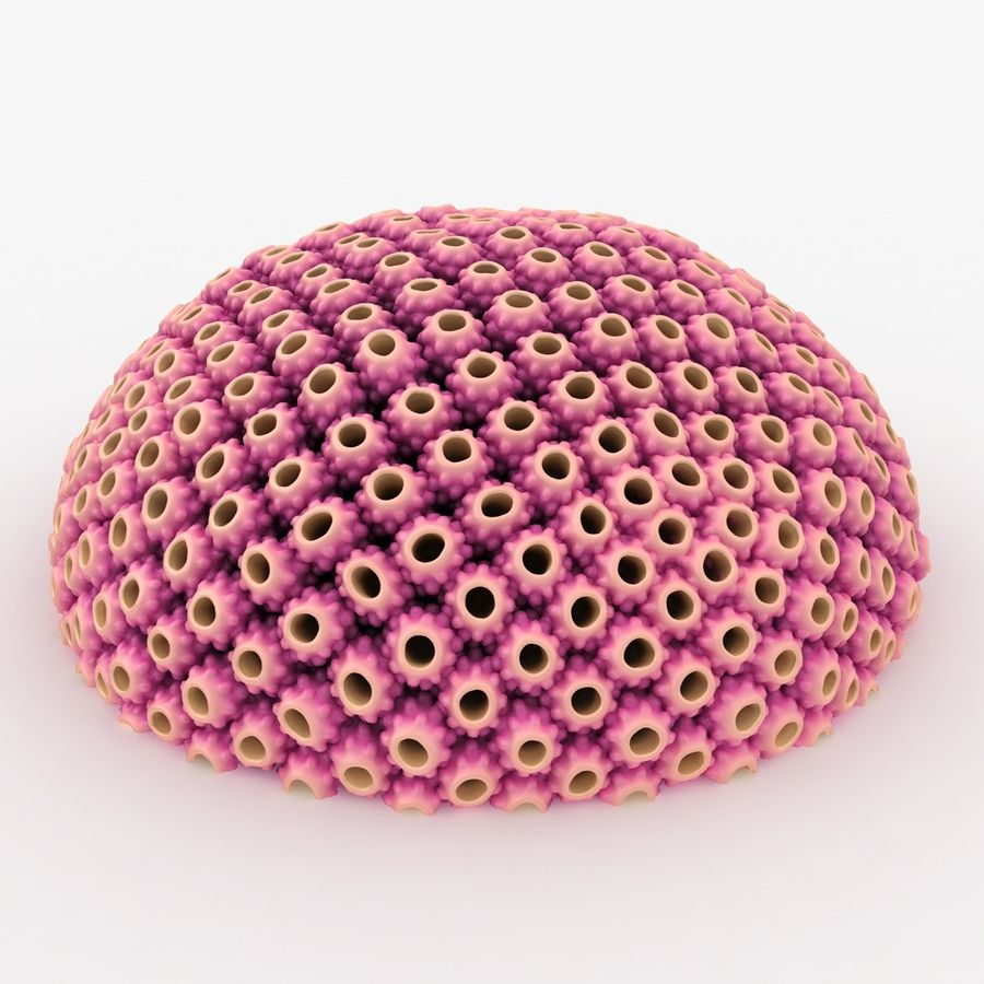 Astreopora Coral Pink royalty-free 3d model - Preview no. 2