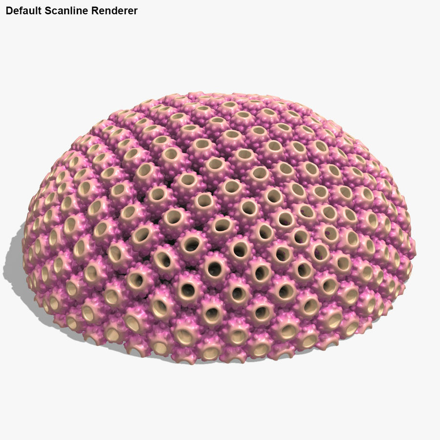Astreopora Coral Pink royalty-free 3d model - Preview no. 14