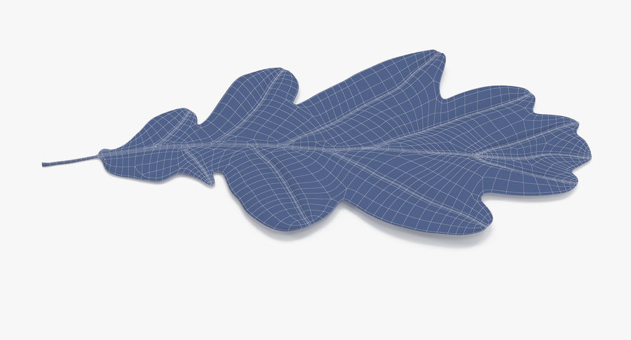 Oak Leaf 02 Collection royalty-free 3d model - Preview no. 53