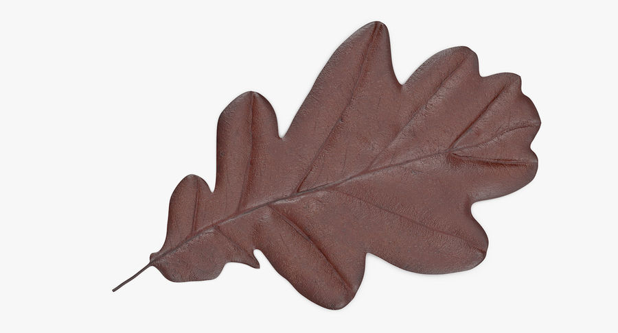 Oak Leaf 02 Collection royalty-free 3d model - Preview no. 14