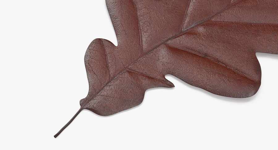 Oak Leaf 02 Collection royalty-free 3d model - Preview no. 15