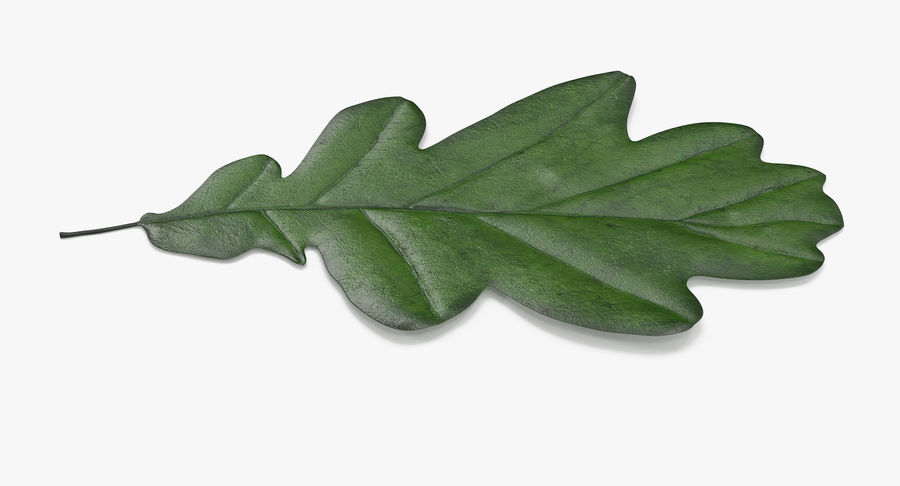 Oak Leaf 02 Collection royalty-free 3d model - Preview no. 21