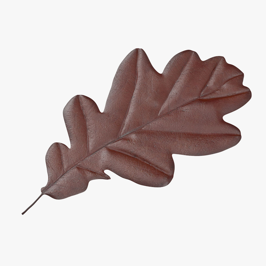 Oak Leaf 02 Collection royalty-free 3d model - Preview no. 2