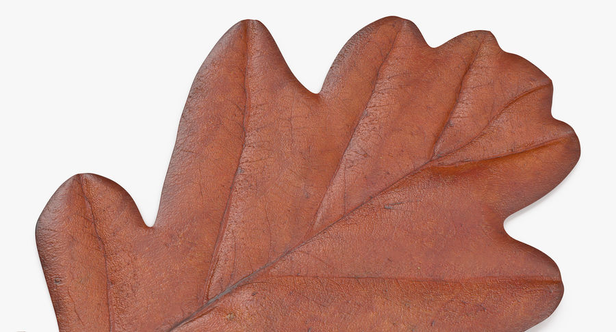 Oak Leaf 02 Collection royalty-free 3d model - Preview no. 35