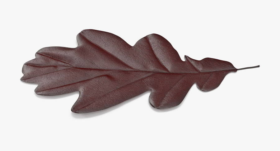 Oak Leaf 02 Collection royalty-free 3d model - Preview no. 40