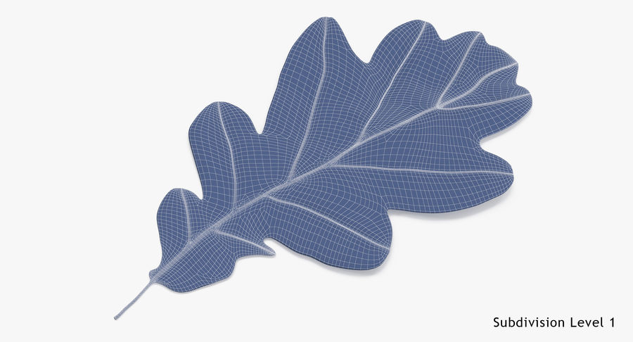 Oak Leaf 02 Collection royalty-free 3d model - Preview no. 60