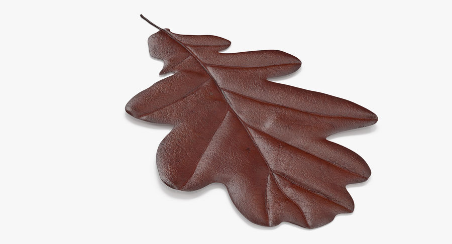 Oak Leaf 02 Collection royalty-free 3d model - Preview no. 10