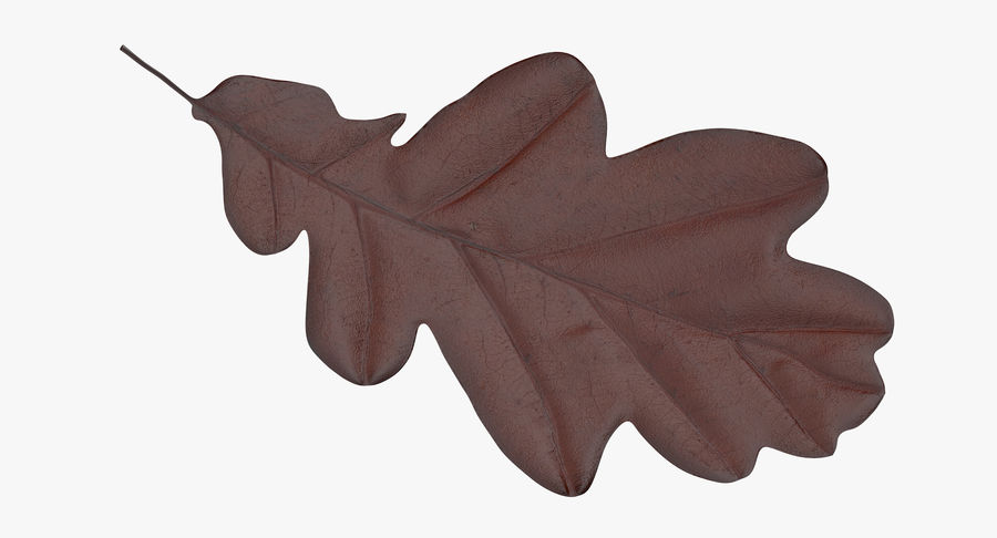 Oak Leaf 02 Collection royalty-free 3d model - Preview no. 13
