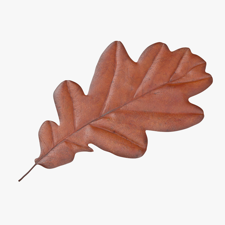 Oak Leaf 02 Collection royalty-free 3d model - Preview no. 4