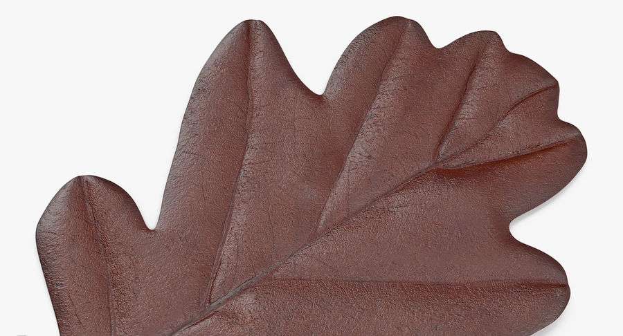 Oak Leaf 02 Collection royalty-free 3d model - Preview no. 16