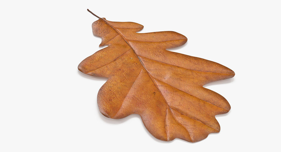 Oak Leaf 02 Collection royalty-free 3d model - Preview no. 46