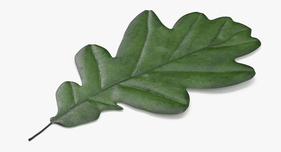 Oak Leaf 02 Collection royalty-free 3d model - Preview no. 19