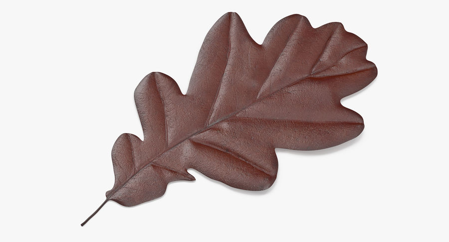 Oak Leaf 02 Collection royalty-free 3d model - Preview no. 8