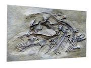 bas-relief dino 3d model