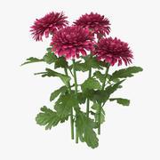Chrysanthemenrosa - Natürliche Gruppe 3d model