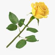 Rose 23 3d model