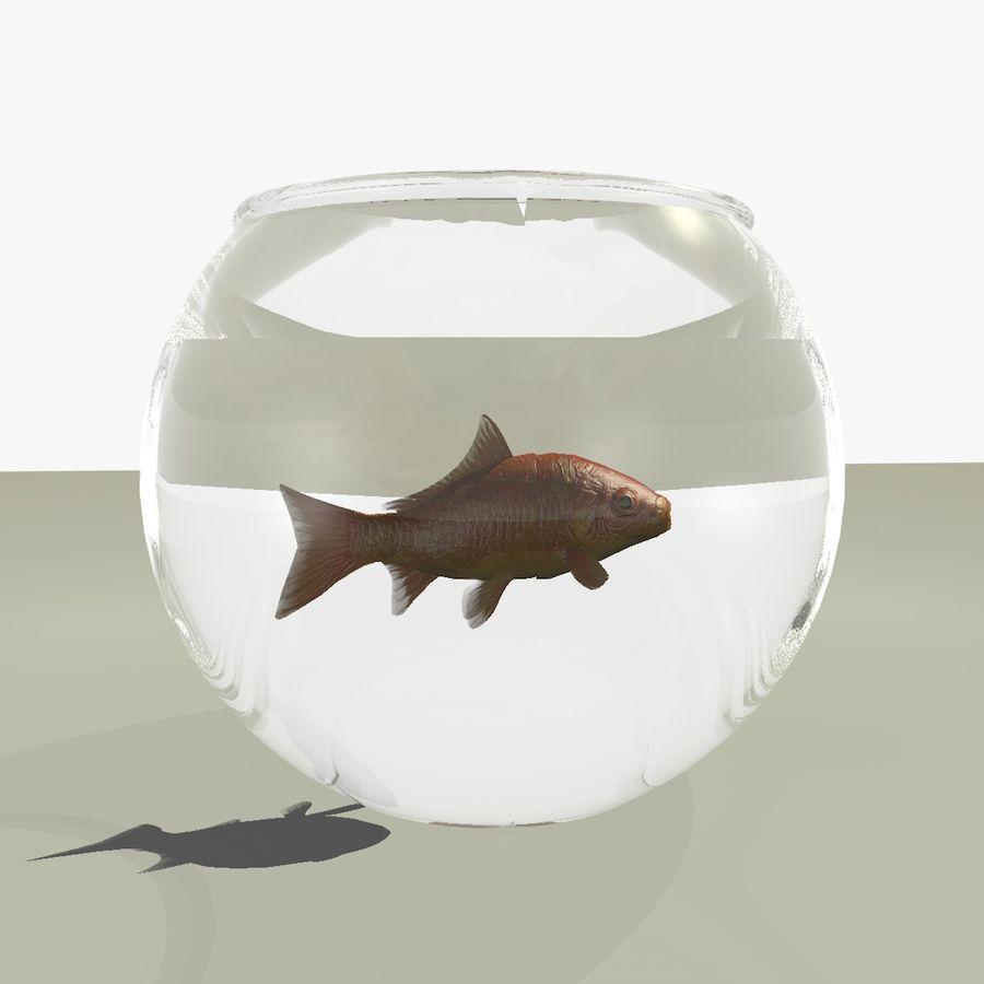 Peixe dourado animado em um aquário royalty-free 3d model - Preview no. 1