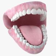 牙齿颚舌头 3d model