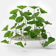 Tropical plant 3d model