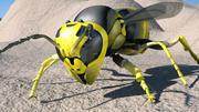 Wasp (hög kvalitet) 3d model