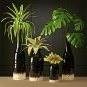 식물 배열 3d model