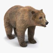 Modello 3D di orso bruno con pelliccia 3d model
