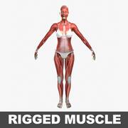 Músculos Rigged Feminino 3d model