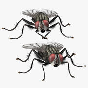 House Fly Two Poses 3d model