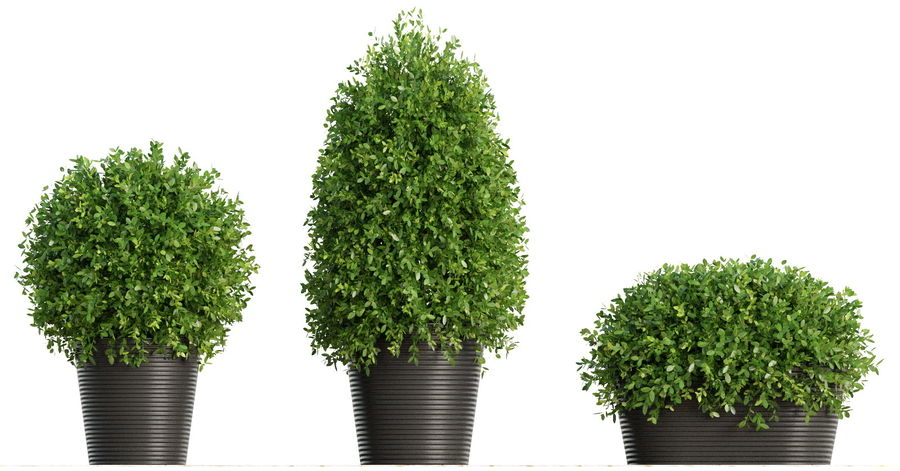 Plantes d'intérieur et d'extérieur royalty-free 3d model - Preview no. 2