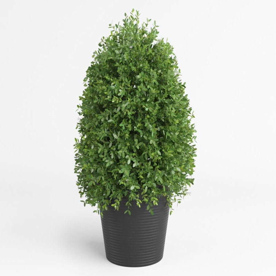 Plantas para interior y exterior royalty-free modelo 3d - Preview no. 4