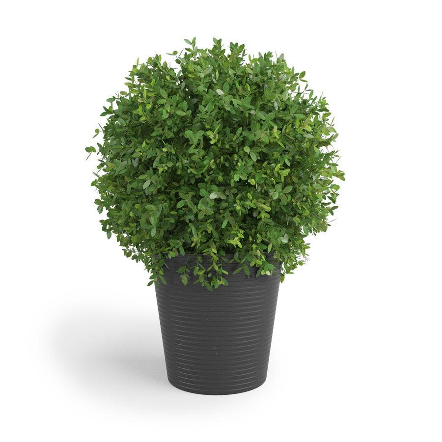 Plantes d'intérieur et d'extérieur royalty-free 3d model - Preview no. 3