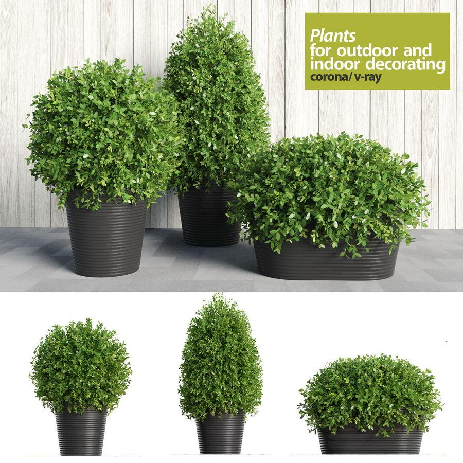 Plantes d'intérieur et d'extérieur royalty-free 3d model - Preview no. 1