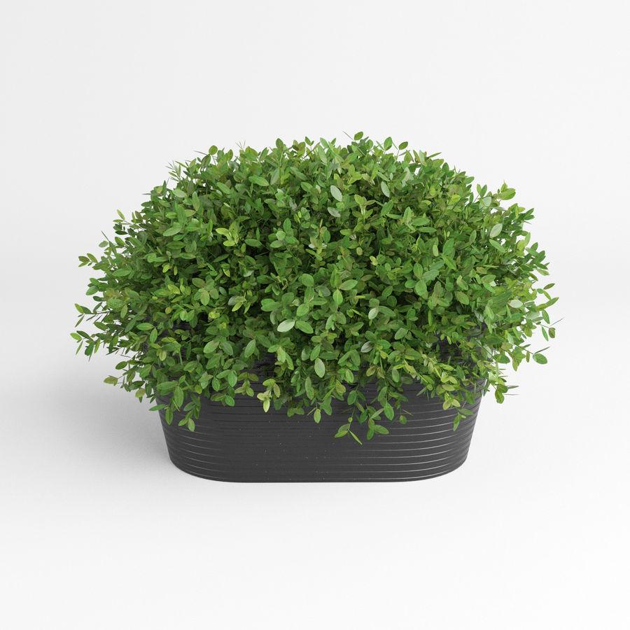 Plantes d'intérieur et d'extérieur royalty-free 3d model - Preview no. 5