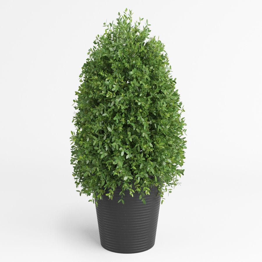 Plantes d'intérieur et d'extérieur royalty-free 3d model - Preview no. 4