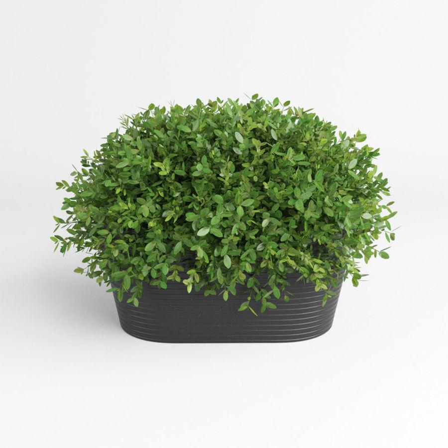 Plantas para interior y exterior royalty-free modelo 3d - Preview no. 5