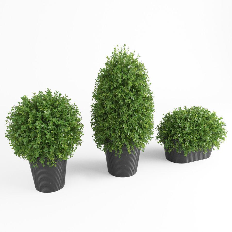 Plantes d'intérieur et d'extérieur royalty-free 3d model - Preview no. 8