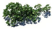 小さな植物 3d model