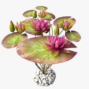lilia woda różowa 3d model