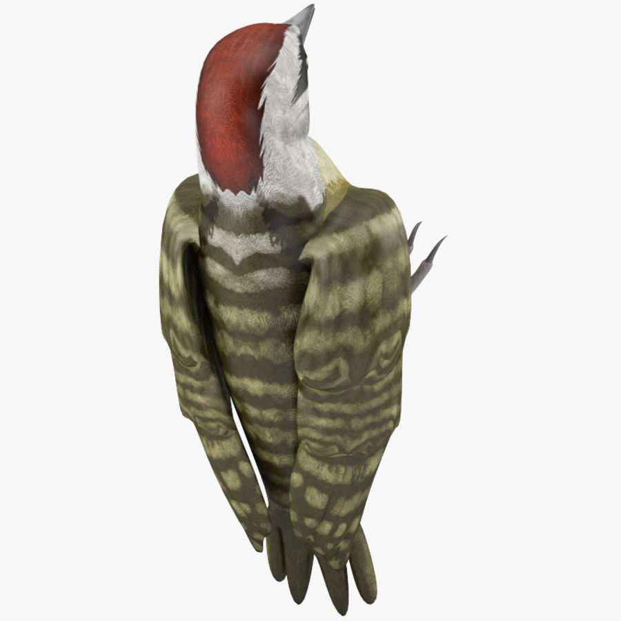 Woodpecker Toy 3 royalty-free 3d model - Preview no. 6
