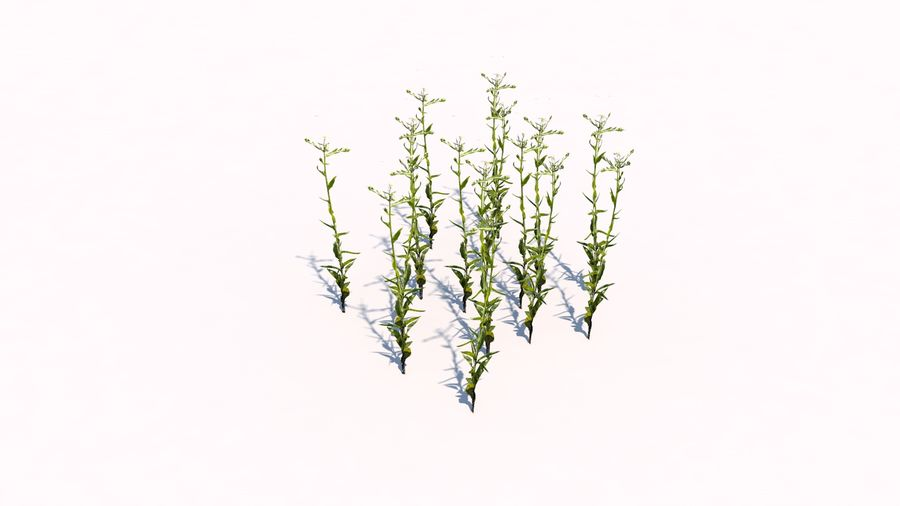 Plants - LowPoly royalty-free 3d model - Preview no. 6