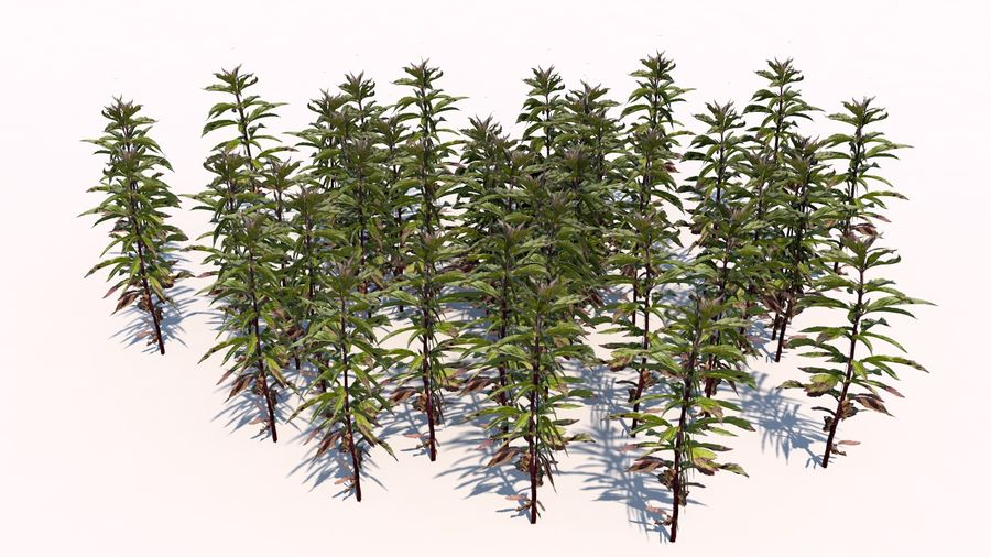 Plants - LowPoly royalty-free 3d model - Preview no. 4