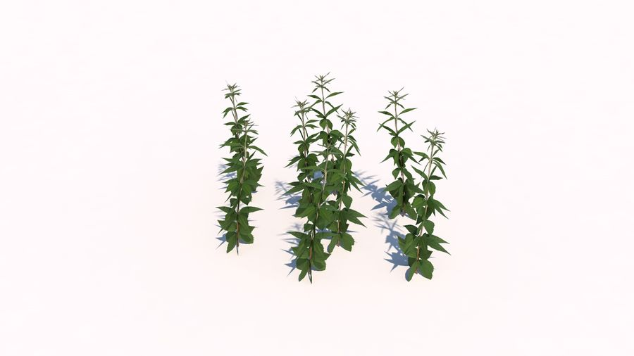 Plants - LowPoly royalty-free 3d model - Preview no. 7
