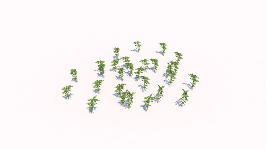 Plants - LowPoly royalty-free 3d model - Preview no. 10