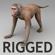 Rhesus macaque rigged 3d model