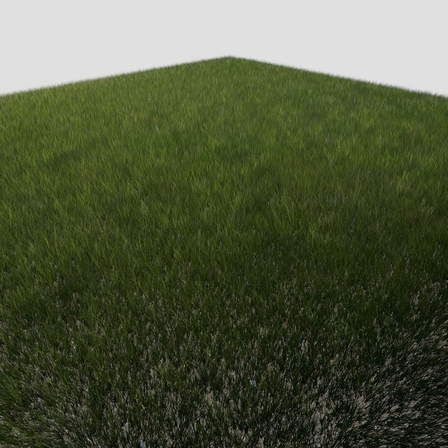 Dynamisch gras (1) royalty-free 3d model - Preview no. 3